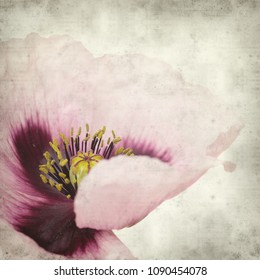 textured old paper background with pink poppy flower