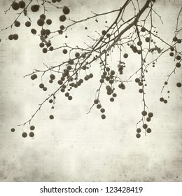 textured old paper background with plane tree branch