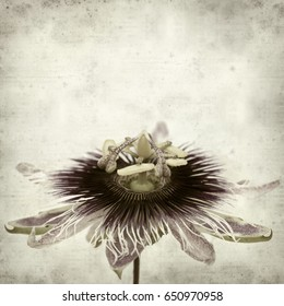 textured old paper background with purple and passifora flower