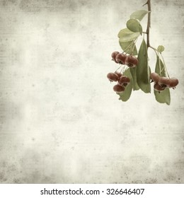 textured old paper background with Pyracantha berries