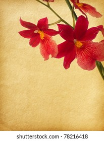 textured old paper background with red orchid