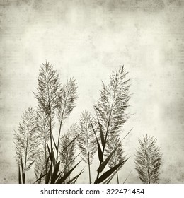 textured old paper background with reeds