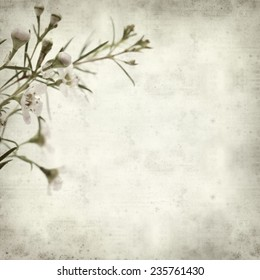 textured old paper background with small pink blooms of waxflower