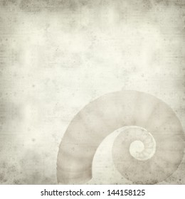 textured old paper background with Spirula  shell