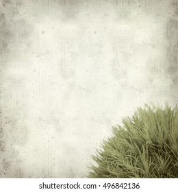 textured old paper background with trendy green carnation flower