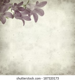textured old paper background with wall bellflower