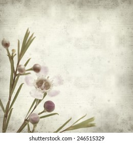 textured old paper background with waxflower