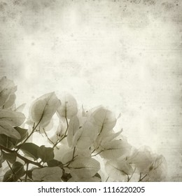 textured old paper background with  white Bougainvillea flowers