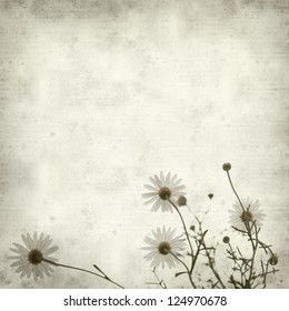 textured old paper background with white marguerite