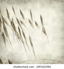 textured old paper background with wild oats stems