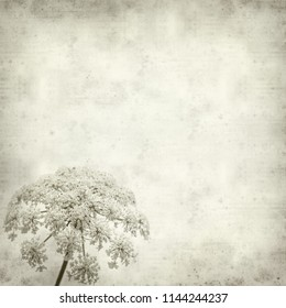 textured old paper background with wild carrot flowers