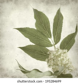 textured old paper background withred elder flowers