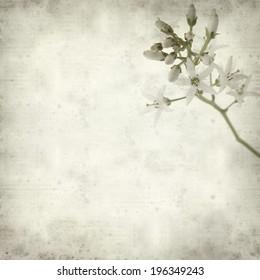 textured old paper background with wjite bogbean flower