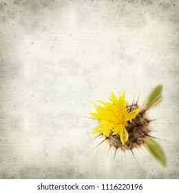 textured old paper background with  yellow Centaurea melitensis,  Maltese star-thistle