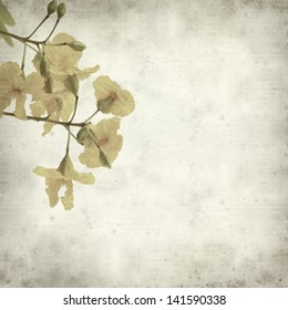 textured old paper background with yellow cassia flowers