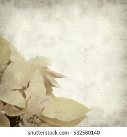 textured old paper background with yellow and orange poinsettia, AKA christmas star,  plant