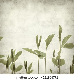 textured old paper background with young shoots of sweet pea plants