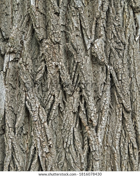 textured-picture-site-old-acacia-600w-18