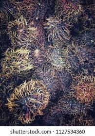 Textured plants background
