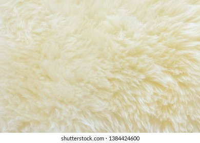 textured of real white cream wool sheep