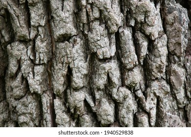 Textured Tree Bark From a Big Amazing Looking Tree