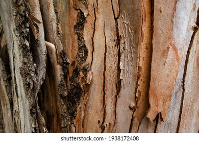 Textured tree bark. Close up. Background