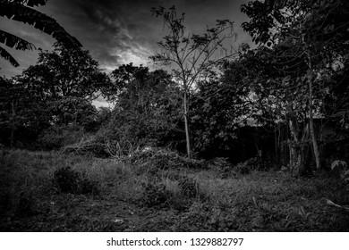 Textured trees and dark skies. Photomanipulation Apocalyptic scenario