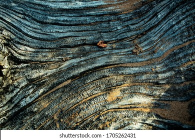 Textured Wood Grain on Empire Bluffs Trail in Sleeping Bear Dunes National Lakeshore on hot, bright, and sunny summer day. Weathered driftwood covered in sand and vegetation. Composite texture.