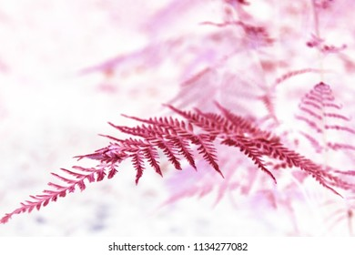 Textures of abstract fern