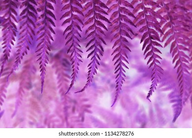 Textures of abstract fern with selective focus