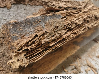 Textures and backgrounds : Nest termite,Close up termites, background of nest termite, white ant, background damaged white wooden eaten by termite or white ant.selective focus.