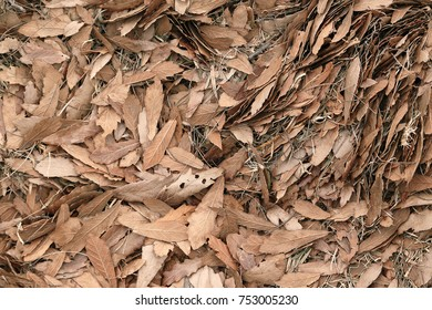 textures with dry leaves