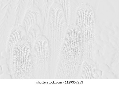 Textures of embossed cactus on background grey
