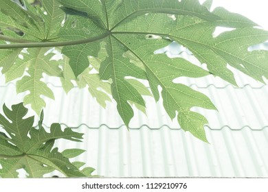 Textures of green leaves and background of green path