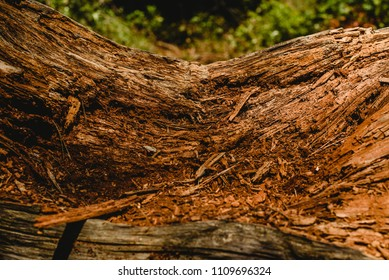 Textures of old and aged  wood and tree trunks