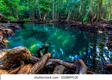 Tha pom mangrove forest, Emerald pool is unseen pool in mangrove forest at krabi, Krabi, Thailand