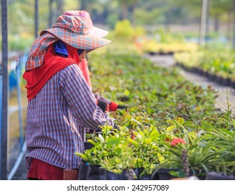 Thai agriculture worker  on crop Flowers.
