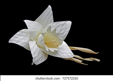 Thai Artificial Funeral Flower(Dok mai chan) used for Royal cremation (Royal Funeral) of the Late King Bhumibol Adulyadej (Thai's King) , black backgroud with space for texts : daffodil , narcissus