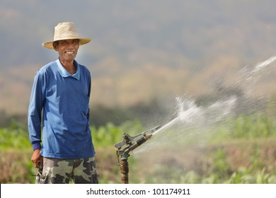 thai asian farmer in tobacco field watering culture