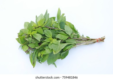 Thai basil on white background.