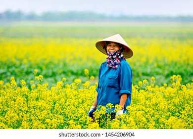 THAI BINH, VIETNAM - DEC. 3, 2017: An unidentified woman happily harvesting vegetables on the fields. This is a large vegetation farm on tidal soil growing vegetables