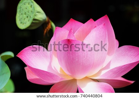 Thai buddhism uses lotus roots flowers stock photo edit now thai buddhism uses lotus from the roots to the flowers to be a symbol of enlightenment mightylinksfo