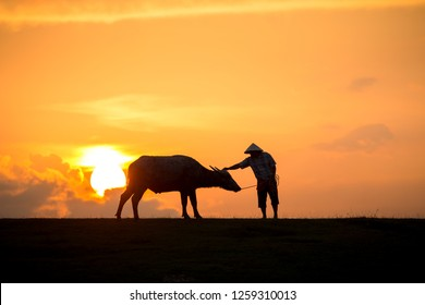 Thai buffalo with farmer man in field at sunset, Nakhon Si Thammarat, Thailand