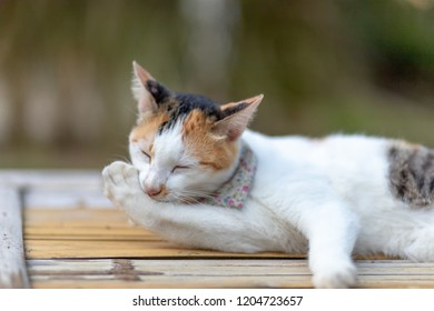 thai cat action