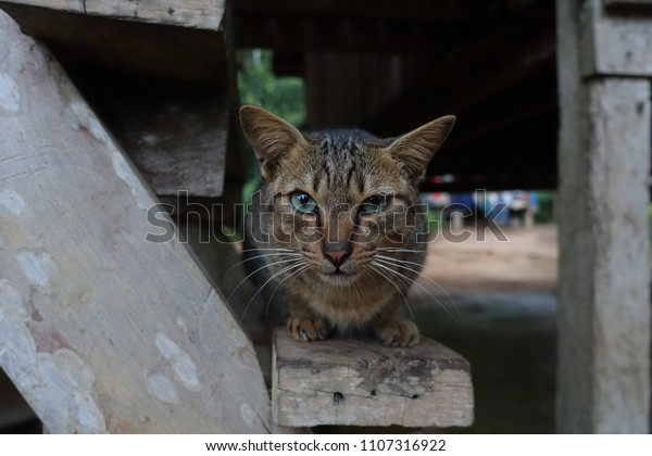 Tremendous Thai Cat Local Thai Style House Stock Photo Edit Now Home Interior And Landscaping Synyenasavecom