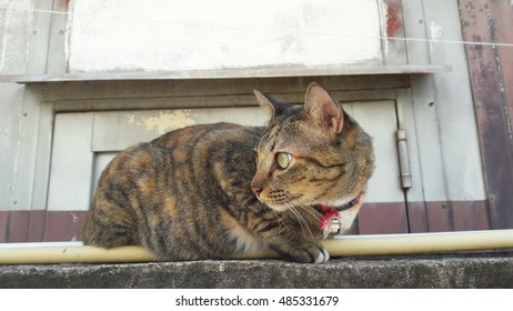 Thai Cat On The Wall