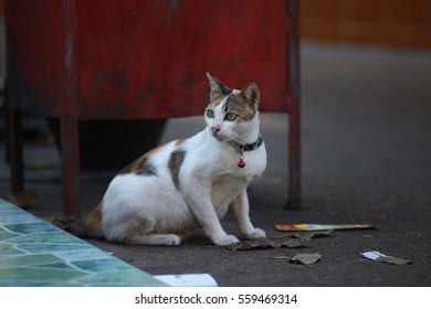 Thai Cat playing with news paper