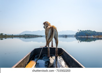 Thai dog in Kao Lham Dam, Kanchanaburi, Thailand. The dog is looking forward to something.