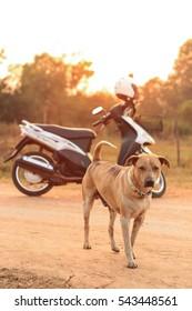 Thai Dog Outdoor