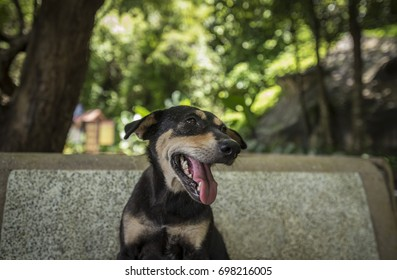 Thai dog portrait with bokeh abstract background